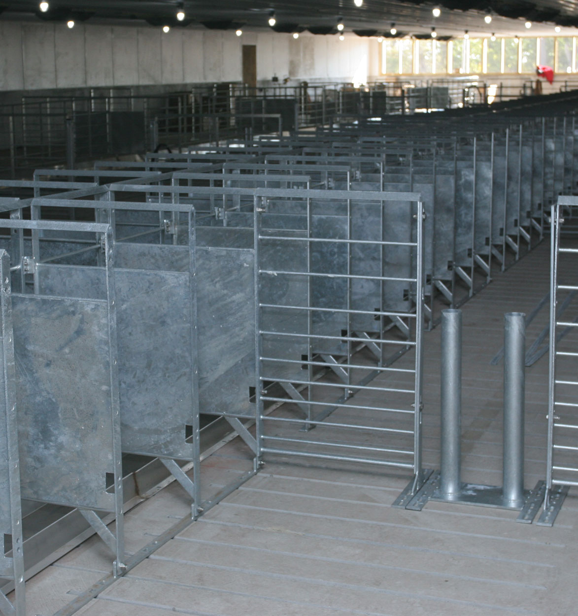 Hog Slat stanchions for sow group housing can be manufactured with several different divider options. (Shown: Galvanized solid metal divider panels with stainless steel sow feeding trough and walk-through post.)